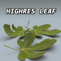Leaf High Resolution
